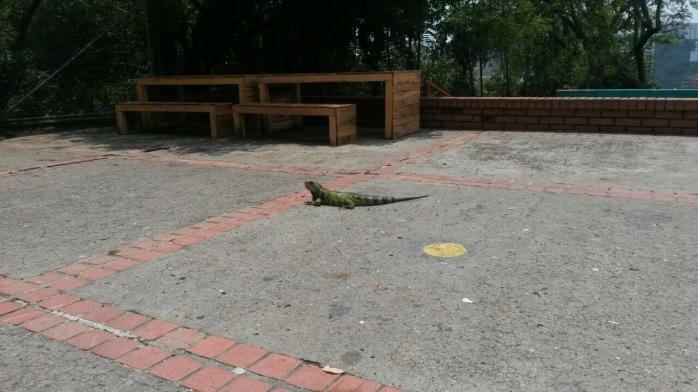 Der Leguan auf dem Schulhof